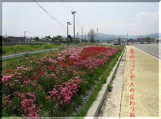tutujijiji12123.jpg