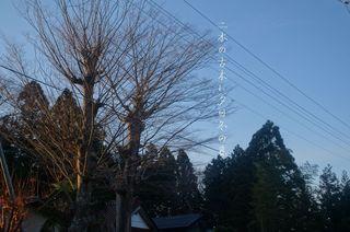 twined trees.jpg