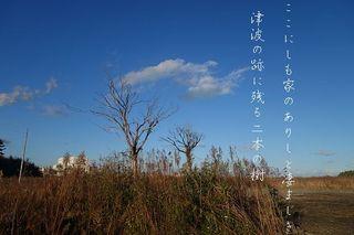 twotrees111.jpg