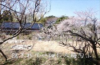 umekakurega_FotoSketcher1.jpg