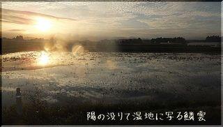 urokokumomomo1.jpg