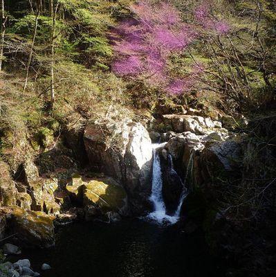 waterfallsakura123.jpg