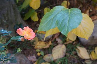 winterrose123.jpg