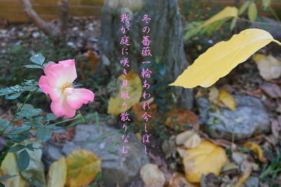 winterrosetanka1.jpg