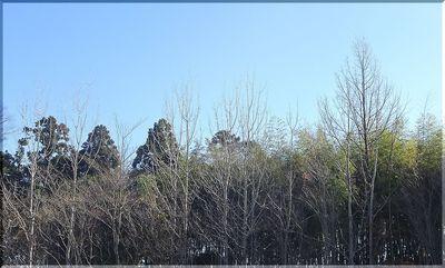 wintertreeesss1.jpg