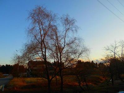 winteryanagi111.jpg