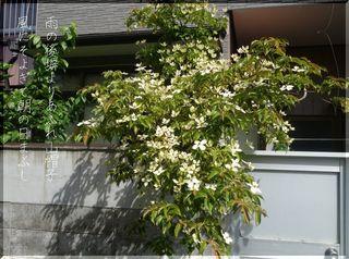 yaboushiiiii12345.jpg