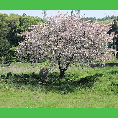 yaesaku123.jpg