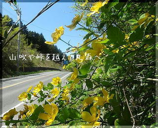 yamabukiiiiii1212.jpg
