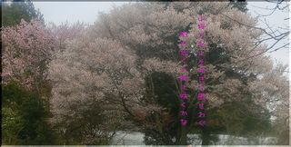yamasakuramachi1111.jpg