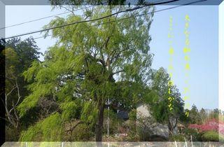 yanagiiiii123.jpg