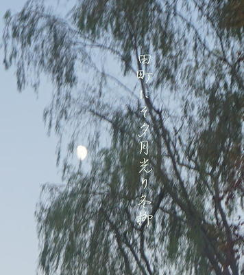 yanagimoon3.jpg