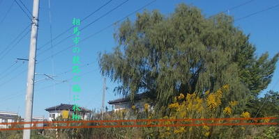 yanagisoma6.jpg