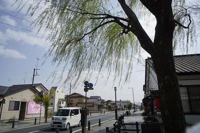 yanagitamachiharu7.jpg