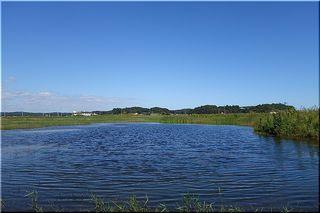 yasawanuma1.jpg