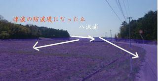yasawaura1111222.jpg