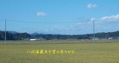 yasawaurammm1.jpg