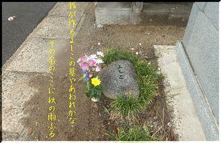 yoshikohaka.jpg