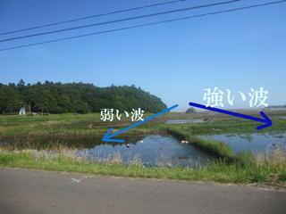 ypwainami123.jpg