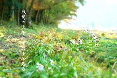 zangiku7.jpg