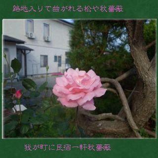 autumnroseeee1111.jpg