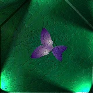 butterflyssssss111112222233334444.jpg