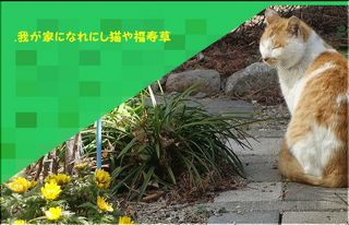 catgardenn1.jpg