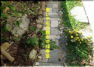 fukujyusouu11.jpg