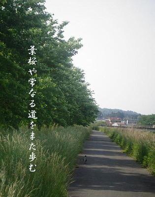 hazakuraaa123.JPG