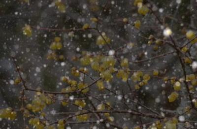 snowroubai1.jpg