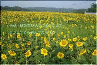 sunflowersssss111.jpg