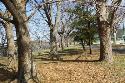 treesline1.jpg