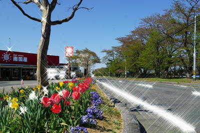 tulipstreet122.jpg
