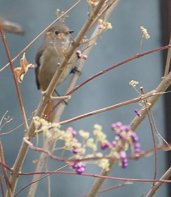 winterbird.jpg