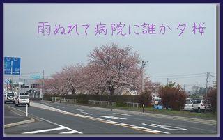 yuuzakura11111.jpg